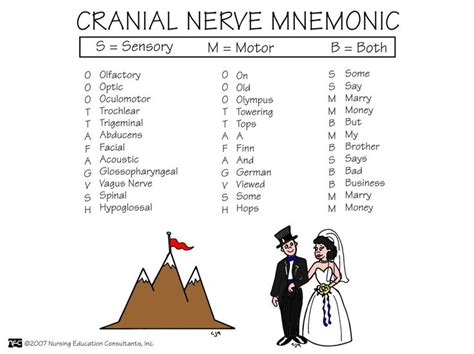 8 Useful Mnemonics by Cranial Nerves Med Surg Mnemonics More