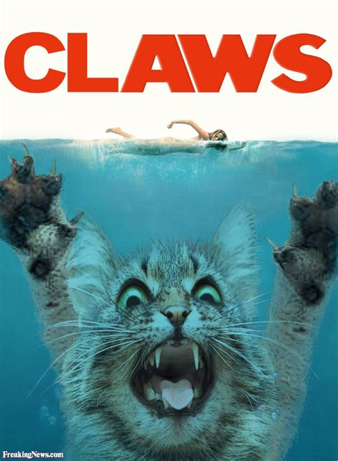 jaws cat boat funny jaws pictures freaking news