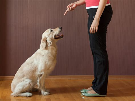 how to teach a puppy to sit 4 ways to teach your to sit wikihow