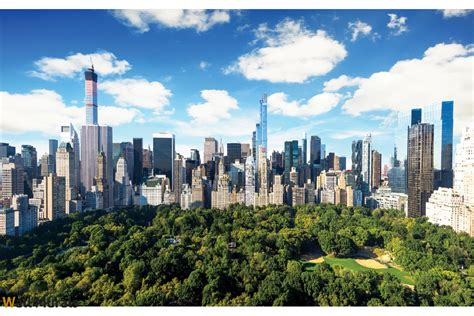 Deer Wall Mural wallpapers mural view of new york central park
