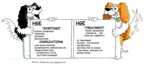 hge in dogs haemorrhagic gastroenteritis hge cavalier matters