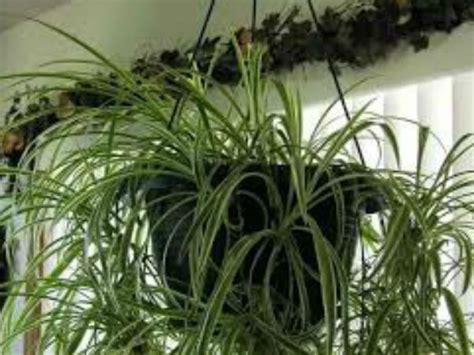vastu tips   indoor plants boldskycom