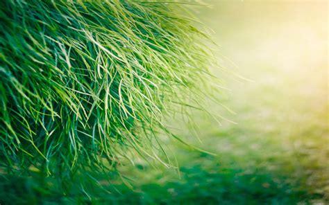 wallpaper of green grass beautiful green grass hd wallpapers