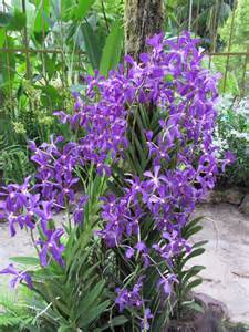 the dilettante photographer orchids national orchid