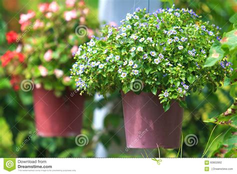 best flowers for small pots small flowers in hanging pots stock photo image 60802892