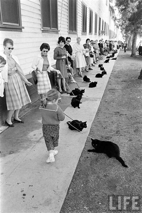 black cat auditions in 1961 bored panda