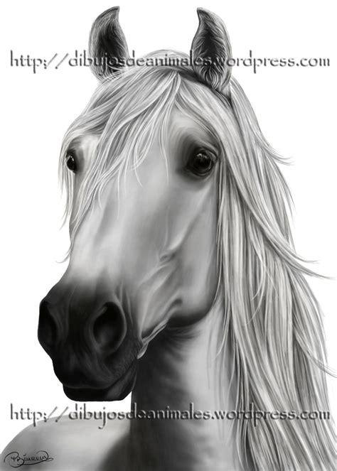 caballo a lapiz dibujos de animales dibujos de animales dibujos a l 225 piz de animales