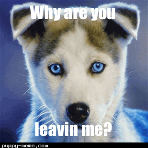 Sadness Meme - cute sad puppy meme www pixshark com images galleries