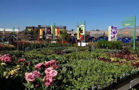 growers house tucson plant nursery tucson az thenurseries