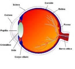 color part of eye uveite infiammazione occhi infiammazione