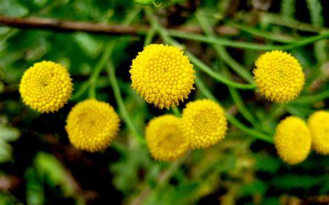 pflanzen für schattige plätze die 86 besten hochaufl 246 sende hintergrundbilder
