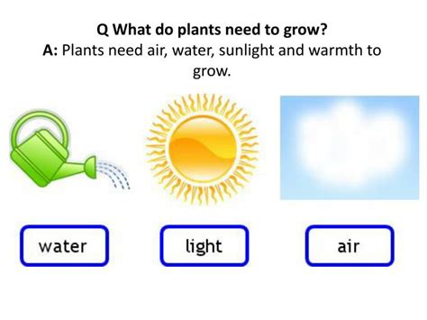 plants that don t need sunlight to grow ppt eatble parts of plant powerpoint presentation id 2810945