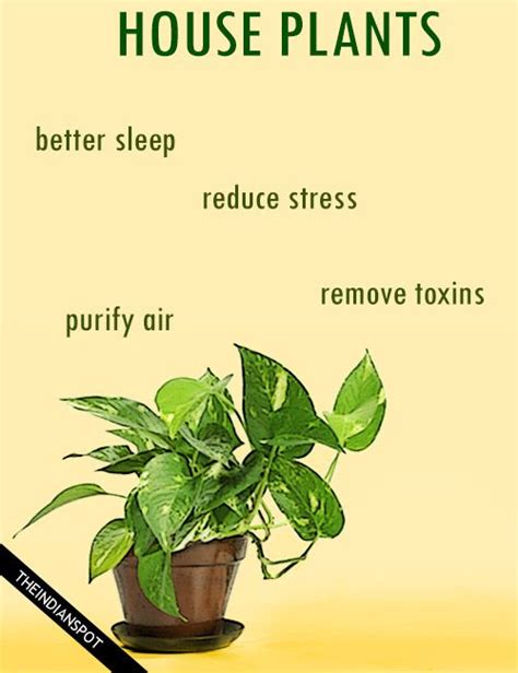 benefits of houseplants best 25 ro purifier ideas on pinterest best ro water
