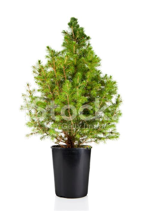 4ft green artificial ficus tree from hill interiors potted trees 28 images green potted ficus tree avas