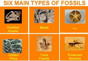 Fuel System Quiz Mr Kehoe S Fossil And Fossil Fuel Quiz Tuesday
