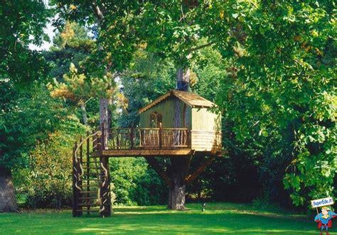 immagini di sull albero casa sull albero di lusso foto di superedo it