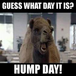 Hump Day Camel Meme - guess what day it is camel newhairstylesformen2014 com