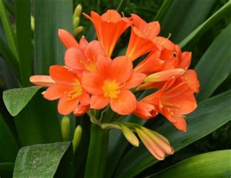 fiori arancioni nomi 10 piante da interno come prendersene cura