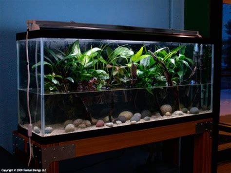 lighting for 55 gallon planted tank 200 gallon fish tank search aquarium ideas