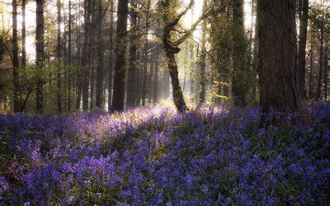forest wallpaper lavender  wallpaper
