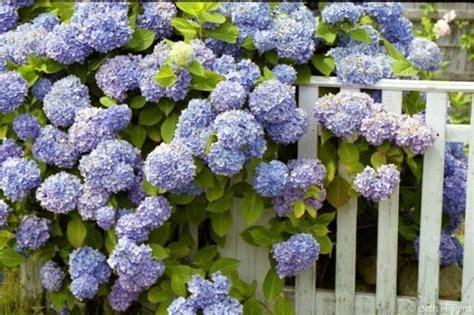 co d fiori fiori per fioriere vasi e fioriere fiori fioriere
