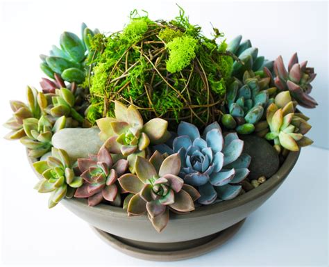 succulent planters diy vibrant succulent planter kelley and cricket