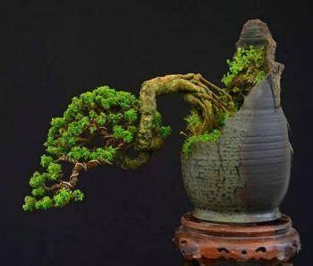 addition  bonsai pots bonsai   grown