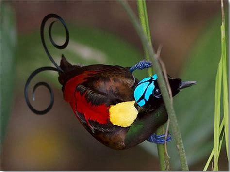 Imagenes Sorprendentemente Bellas | im 225 genes fascinantes de la naturaleza parte 2 taringa
