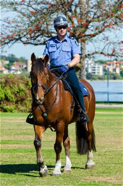 related keywords & suggestions for mountedpolice