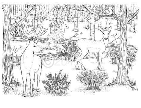 deer family coloring page adult coloring page deer woodland forest deer in the dell wall