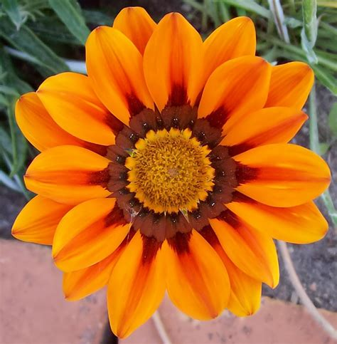 imagenes gratis flores exoticas flores exoticas muy lindas taringa