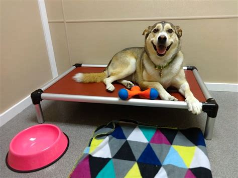 boarding fort collins boarding four paws pet hotel resort colorado