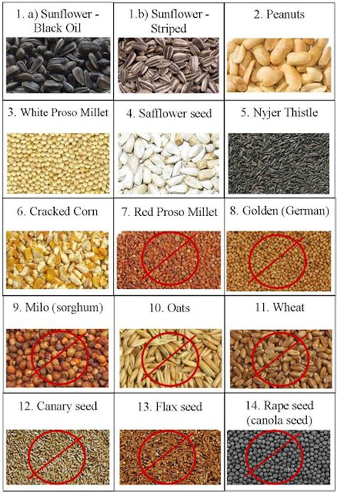 what do house finches eat wild birds unlimited what seeds do wild birds eat