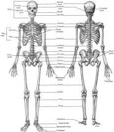 anatomical position diagram anatomy position skeleton human anatomy skeleton for