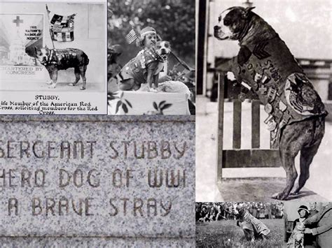 Sgt Stubby Decorated War Animals Remembered Association Sgt Stubby