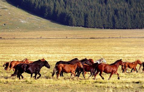 dati cavalli il declino della popolazione equina riders advisor
