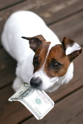 how much money is a puppy how much is that doggie in the window adoption guide