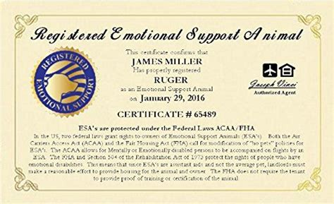 esa certification 1000 ideas about emotional support animal on service dogs psychiatric