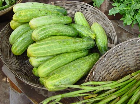 8 vegetables that act like cucumber gherkin world crops database