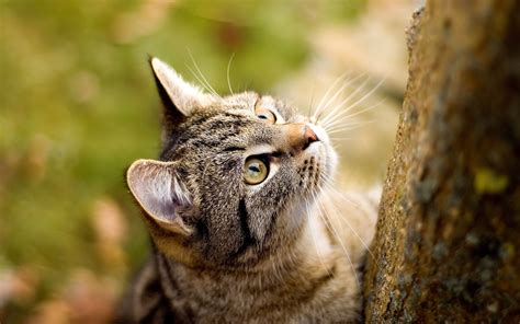 cat staring up wallpapers hd wallpapers