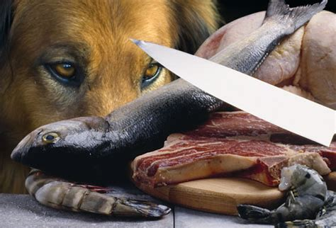 can dogs eat salmon toxic and dangerous foods your should never eat