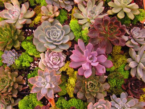 top nurseries  north county san diego ca ync