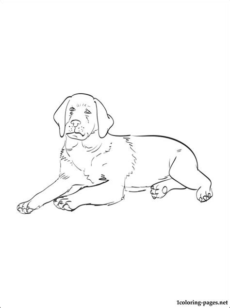 labrador coloring pages free coloring pages of labrador retriever