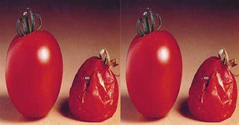 Lemari Es Warung jangan simpan tomat dalam lemari es ini sebabnya