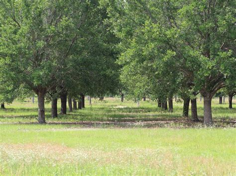 tree farms for sale mcmillan tree farm tract 4 farm for sale by owner