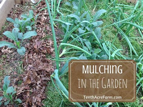 mulching in the permaculture garden tenth acre farm