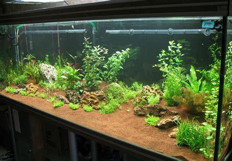 aquarium aquascaping aquarium en aquascaping 13 les plantes