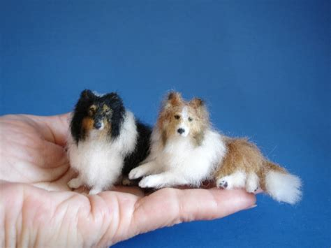 mini sheltie puppies the gallery for gt miniature sheltie puppies