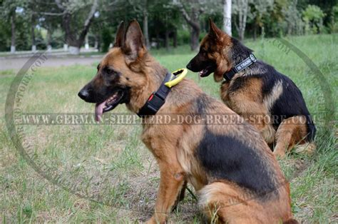 german shepherd collars german shepherd collar with handle c46 1019 collar with handle and