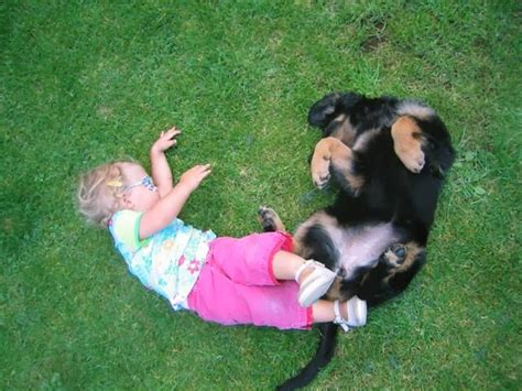 top family dogs best family dogs breeds picture